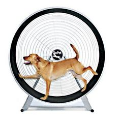 RadioFence.com - GoPet TreadWheel For Large Dogs, $1,199.95 (http://www.radiofence.com/gopet-treadwheel-for-large-dogs/)