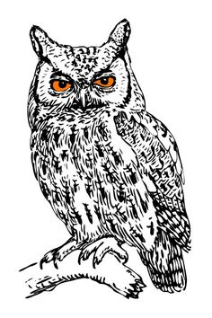 Owl Pictures Sketch Drawing Black And White Nature Prints Woodland Animals Nursery Tribal Wall Decor Digital Download Printable Art  Use for wall art, home decor, mixed media, arts and crafts, scrapbook supply, labels, stickers, transfers, tags, bookmarks, invitations, calendars, greeting cards, T-shirts, coffee cups and much more.