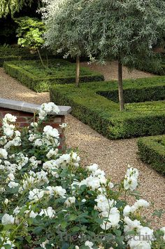 The formal shapes and planting have created a haven of peace and tranquility