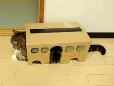 Maru is the Cat Bus from Totoro!