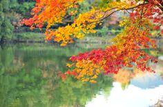 https://flic.kr/p/7iSHHu | colorful autumn | 嵐山竹林走向寂光院途中  View On Black