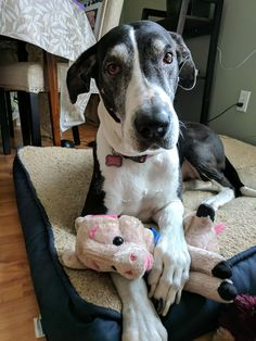 """Abby and her """"baby"""" she's had it for 3 years & she bathes it carries it around cuddles it... She just loves her baby piggy!"""