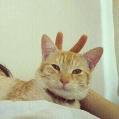 Ray es un gatito con poco sentido del humor