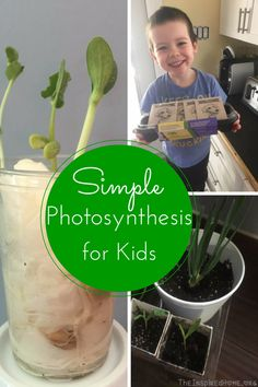 Photosynthesis for Kids Science Experiments Kids, Science Fair, Science For Kids, Science Activities, Life Science, Activities For Kids, Physical Science, Science Penguin, Earth Science