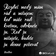 Citát od Budhu #citaty Story Quotes, True Stories, Love, Amor