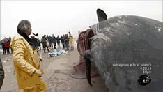 Outrageous Acts of Science: Exploding Whales