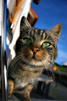 Lovely cat photo, green eyes