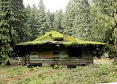 Once a family getaway, this mossy roofed cabin is now abandoned. Near ZigZag in NW Oregon.(by swainboat)
