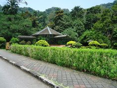 The Penang Botanic Gardens are also known as the Waterfall Gardens due to the presence of a cascading waterfall nearby.