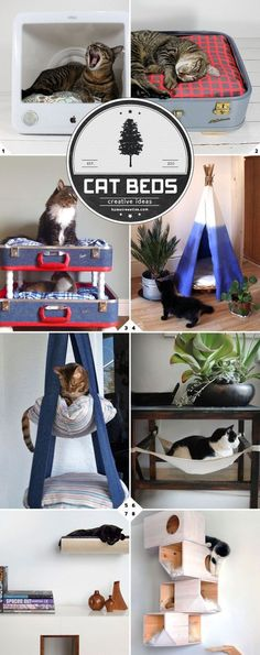 Our little furry friends. They're comfortable living the simple life in cardboard boxes. But here are some unique and more comfortable bed ideas for your cats, including some ideas on how to make your own. Upcycled and DIY Ideas Upcycled computer monitors Ideal Toys, Photo Chat, Cat Room, Pet Furniture, Furniture Cleaning, Furniture Dolly, Luxury Furniture, Small Cat, Animal Projects