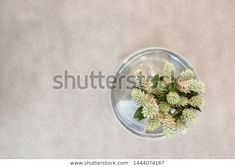 Find Flower Buds Glass Vase Top View stock images in HD and millions of other royalty-free stock photos, illustrations and vectors in the Shutterstock collection. Thousands of new, high-quality pictures added every day. Top View, Bud, Vectors, Glass Vase, Photo Editing, Royalty Free Stock Photos, Illustrations, Flowers, Pictures