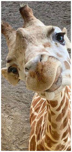 Cute Creatures, Beautiful Creatures, Animals Beautiful, Planeta Animal, Animals And Pets, Baby Animals, Majestic Animals, Cute Funny Animals, Animal Pictures