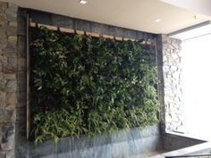 We turned a Water Wall into a Livingwall with the greenwalls.com system  www.greenery.ca
