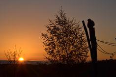 Coucher de soleil au Parc Animalier d'Auvergne