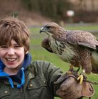 Falconry. Another great #TeamBuilding activity you can enjoy on our site!