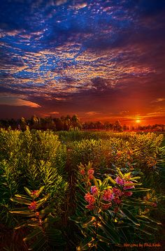 """https://flic.kr/p/oesYSS   Heaven on Earth Flickr   Wisconsin Horizons by Phil Koch. Lives in Milwaukee, Wisconsin, USA. <a href=""""http://phil-koch.artistwebsites.com"""" rel=""""nofollow"""">phil-koch.artistwebsites.com</a> <a href=""""https://www.facebook.com/MyHorizons"""" rel=""""nofollow"""">www.facebook.com/MyHorizons</a> #wisconsin #discoverwisconsin"""