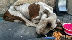 'Practically dead,' starving dog rescued from South LA street
