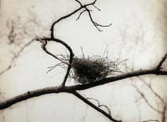 bird nest in winter branches Bokashi, All Nature, Encaustic Painting, Artist Profile, Wabi Sabi, White Photography, Nature Photography, Oeuvre D'art, Les Oeuvres