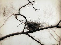 le nid ~ Suivre le chemin
