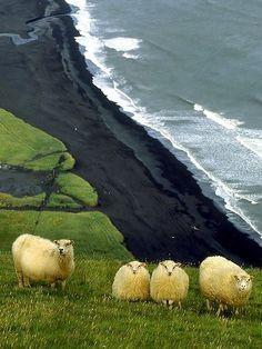 Black volcanic sands, Vík Beach (Iceland)