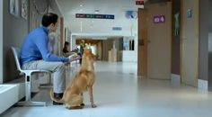 Dad Waits With Dog for His Newborns! What He Saw When The Door Opens Will Surprise You! - Breaking Soup