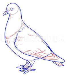 How To Draw Pigeons, Step by Step, Drawing Guide, by makangeni | dragoart.com
