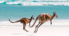 Gawk at these super gorgeous Instagram shots of Australia.  http://mashable.com/2016/02/11/9-popular-pics-australia/?utm_cid=mash-prod-nav-sub-st