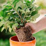 10 ανθεκτικά φυτά για μπαλκόνι | Τα Μυστικά του Κήπου Herbs, Plants, Gardens, Outdoor Gardens, Herb, Plant, Garden, House Gardens, Planets