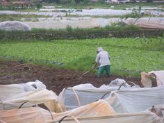 A farmer on the move to till the lands, prelude to seedling,