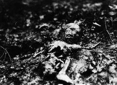 Horrific crime scene photo of Baby Lindbergh