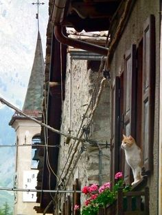 Cats just being #cats all around the world. Valle d'Aosta, Italy