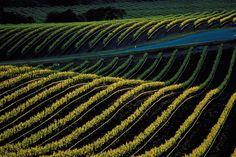 http://www.somelier.ro/vinurile-bio-si-viticultura/