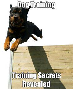Dog Training Training Secrets Revealed (courtesy of @Pinstamatic http://pinstamatic.com)