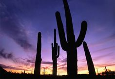 Saguaro National Park, Ariz.