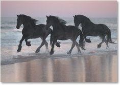 HOR 01 01 - Three Friesian Horses Cantering In Surf On Beach At Dusk - Kimballstock All The Pretty Horses, Beautiful Horses, Animals Beautiful, Cute Animals, Black Horses, Wild Horses, Majestic Horse, Friesian Horse, Mundo Animal