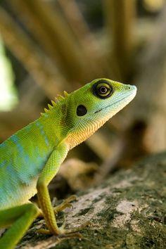 (via 500px / Side profile of a green lizard by Tuomas Lehtinen)