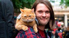 A street cat named Bob :)