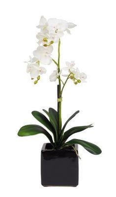 House of Silk Flowers Artificial 17-Inch Phalaenopsis Orchid, Mini, White by House of Silk Flowers, http://www.amazon.com/dp/B004XBYJYK/ref=cm_sw_r_pi_dp_RMG7rb1HREK0M