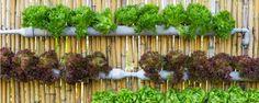 Passo a passo: Jardineira de PVC - Pessoal, hoje vamos aprender a fazer uma linda jardineira de PVC para montarmos uma horta vertical.  Material:  1 cano de PVC de 100 mm de espessura;  2 vasos de plástico ou tampões próprios para canos;  1 serra;  1 furadeira;  1 régua;  1 caneta marcador permanente;  1 pacote peq... - http://www.ecoinseticida.com.br/ecoblog/2015/08/06/passo-a-passo-jardineira-de-pvc/