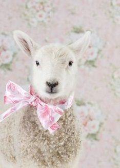 Farm Animals, Animals And Pets, Cute Animals, Beautiful Creatures, Animals Beautiful, Sheep And Lamb, Little Bo Peep, Counting Sheep, Mundo Animal