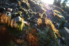 Autumn sunshine #photography #art #outside #nature #beautiful
