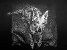 Dierenportret zwitserse herder pup: Wit contékrijt op zwart papier (2011)