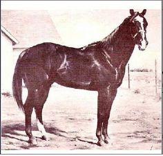 Traveler, de sangre Quarter fue considerado un caballo poco valioso y se usó como objeto de apuesta en la mesa de un bingo. Se apareó con excelentes yeguas Quarter y sus hijos resultaron magníficos. Hoy muchos caballos Quarter Horse poseen su legado genético.