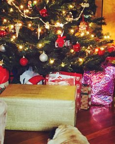 Rocco has been laying in front of the tree wondering just what is in this box! #pug #christmas  Merry Christmas to ALL my followers and your families. Make 2016 the best year of your life.  Love  A. ------------------------------------ #christmas #puglife #tbt #winter #family #boss #blessed #lifestyle #beautiful #god #success #instagood #instapic #strength #amazing #photography #motivation #marketing #fitness #blackfriday #foodie #bestoftheday #smile #workout #like4like #iphoneonly…
