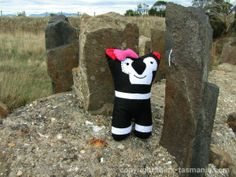 Tasmanian Softies. Doozie pictured at Spiky Bridge near Swansea. Article and photo for www.think-tasmania.com