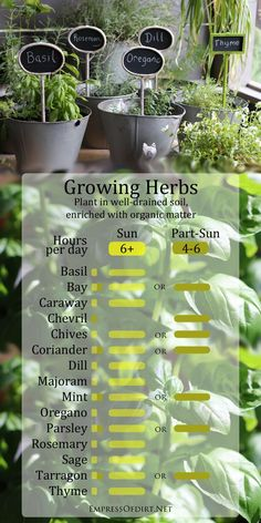 How to grow herbs plus a handy sun chart to know where basil, rosemary, dill, oregano, thyme, and more do best.