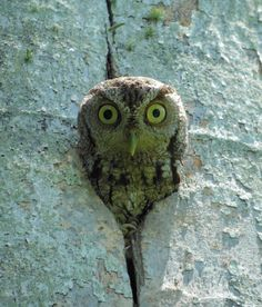 Owl photo made by Jose Arellano