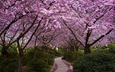 spring wallpaper free download