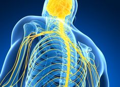 Spinal cord stimulation could expand the benefits of deep brain stimulation on Parkinson's disease motor symptoms to more patients. Deep Brain Stimulation, Spinal Cord, New Details, Chronic Pain, Parkinson's Disease, Foundation, Alternative, Study, News