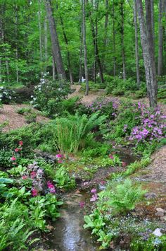 Looking down the natural stream with hundreds of Azaleas and native Ferns, leading to a cascading waterfall. Landscaped by Pat Carrier